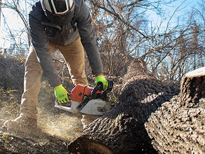 Kentucky Tree Removal