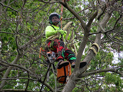 NKY Tree Removal