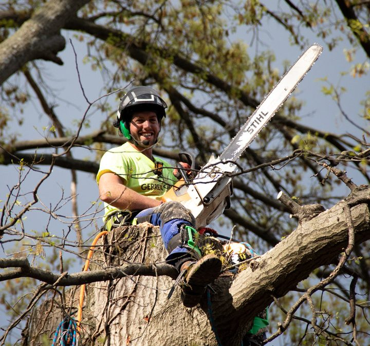 What to Do if a Storm Damaged your Tree