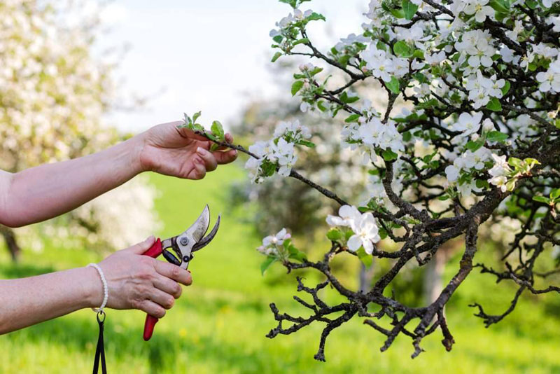 Young Trees Need Specific Pruning
