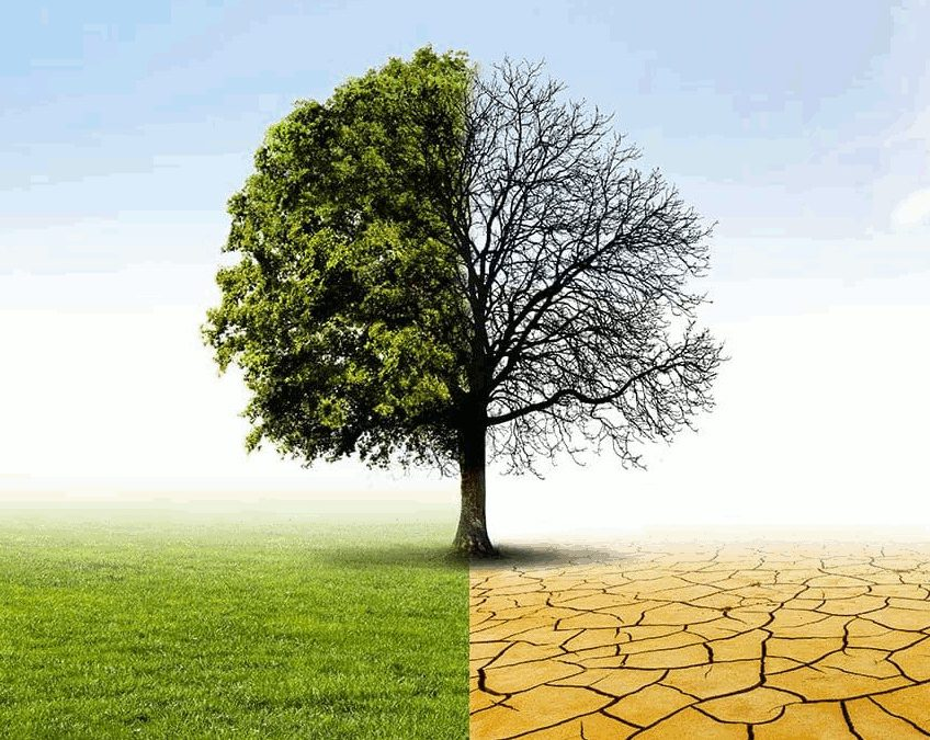 Drought & Trees